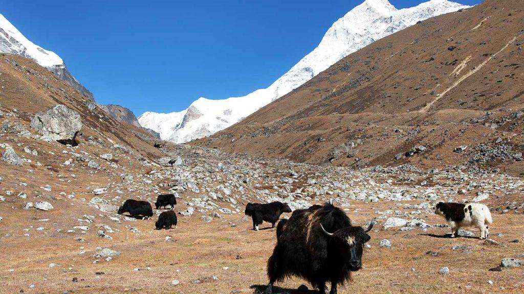 Mt. Makalu Expedition